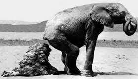 elefante cacca